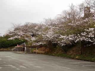 2.コミュニティー 桜.jpg